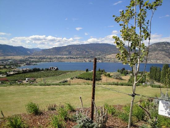 Poplar Grove Winery: just a sampling of the view