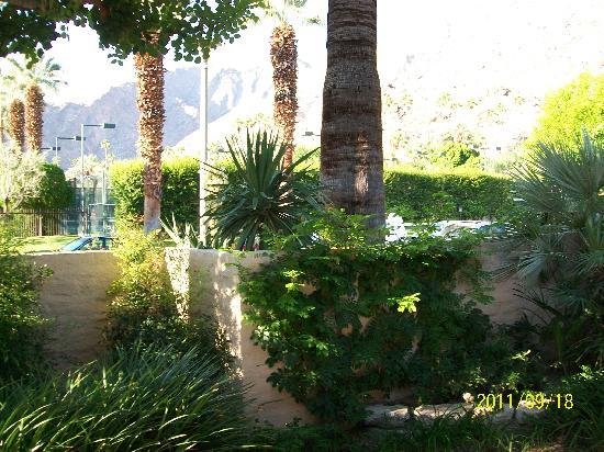 Palm Springs Tennis Club: The Grounds