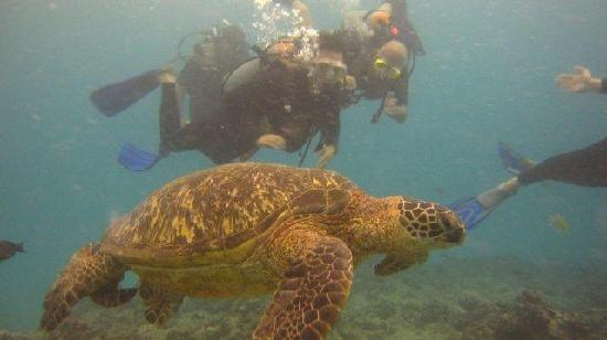 Oahu Diving: Up close with a sea turtle