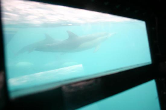 Dana Point, CA: From the underwater pod