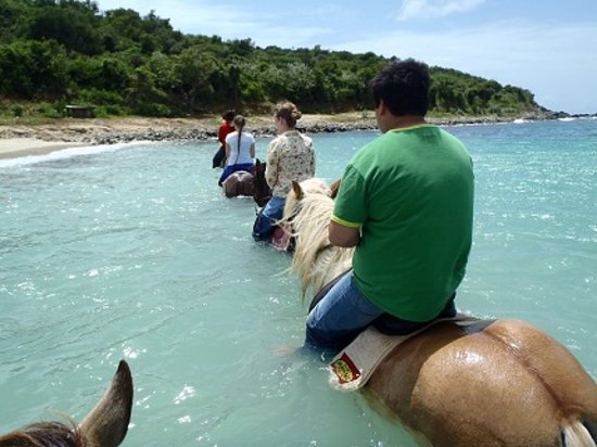 Lucky Stables: riding in the ocean! the best part!