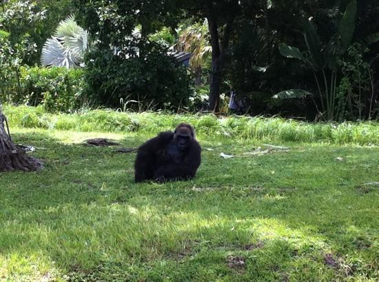 Zoo Miami: strike a pose!
