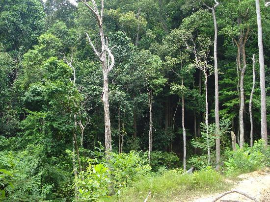 คอรัลวิว ไอส์แลนด์ รีสอร์ท: Nice jungle trek