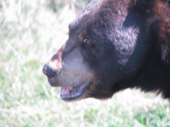 Bear Country USA: Another Bear