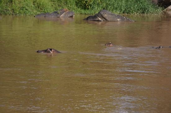 Mara Timbo Camp: Overlooking the hippo pool