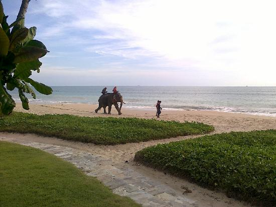 Layana Resort and Spa: Elephant clearing logs from beach