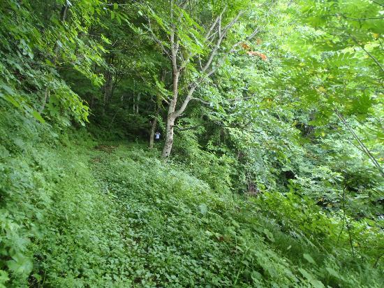 Okura Falls: ②山中ルート