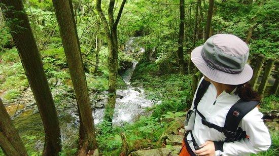 Okura Falls: ③川沿いルート途中