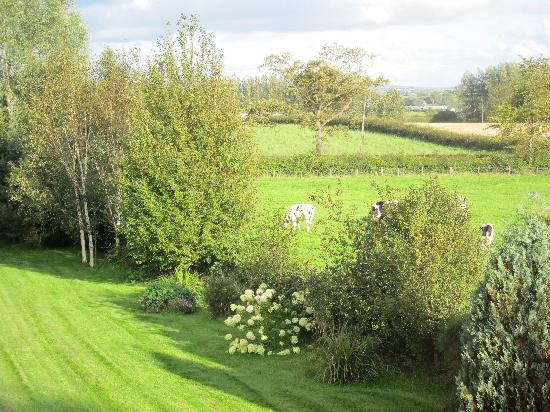 Country Garden House: garden