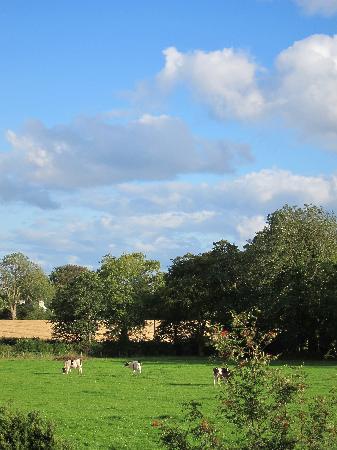 Country Garden House: views