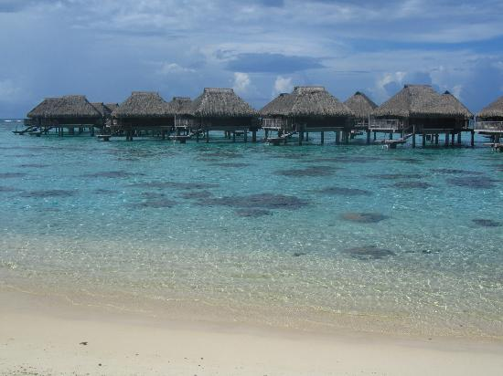 Hilton Moorea Lagoon Resort & Spa: water around the over water bungalows