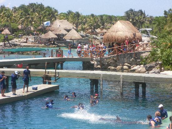Xcaret Park: parte de los delfines Un calorrr