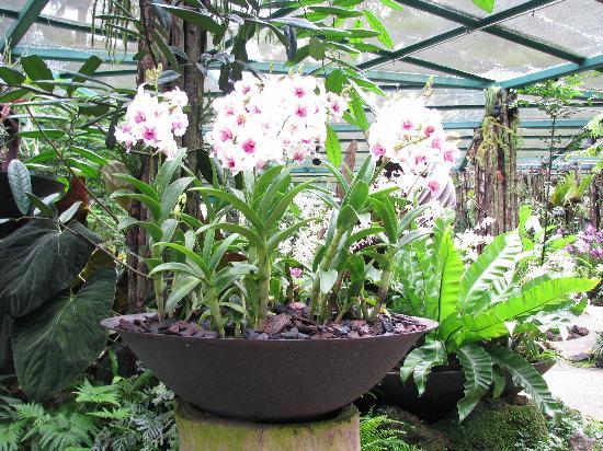 สวนพฤกษชาติสิงคโปร์: Orchid House 1