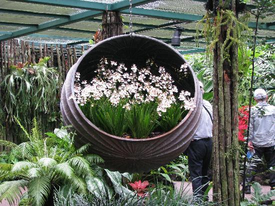 สวนพฤกษชาติสิงคโปร์: Orchid House 3