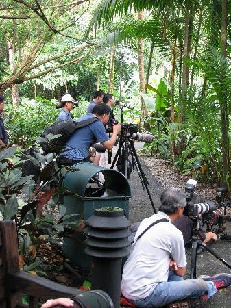 สวนพฤกษชาติสิงคโปร์: Bird Watchers