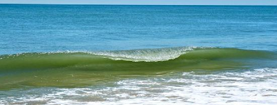 The Ocean Dunes at Amagansett: Ocean Wave