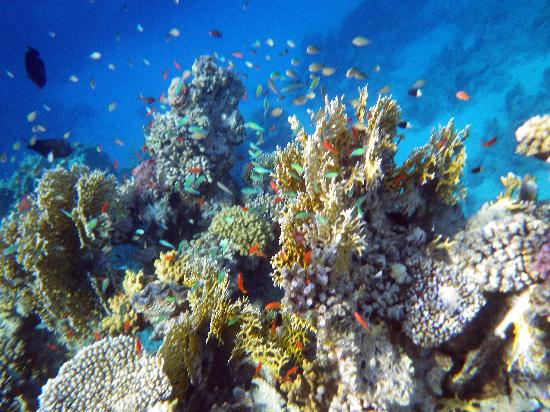 Brayka Bay Reef Resort: lovely reef