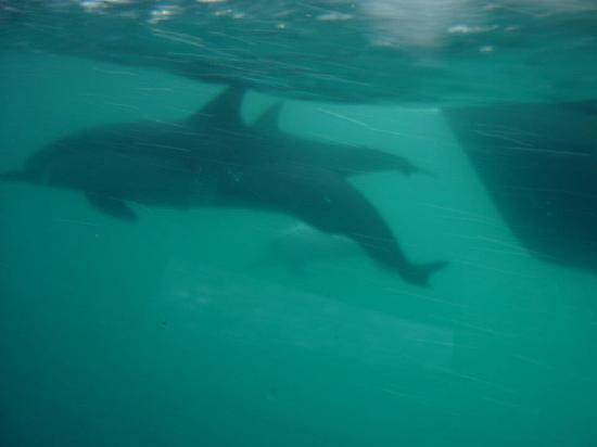 Dana Point, CA: Dolphins as seen from the pod
