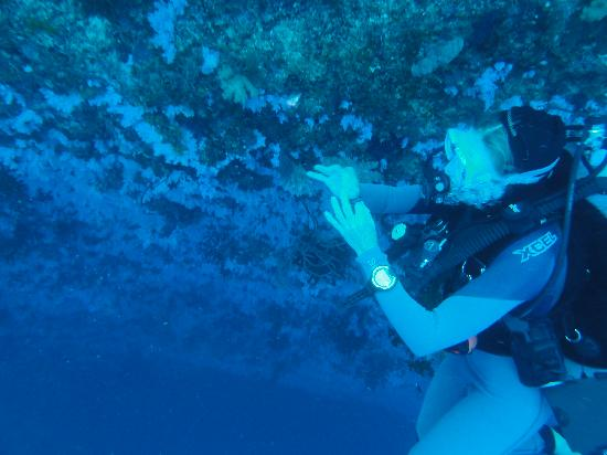 Nakia Resort & Dive: Julie and the Great White Wall!