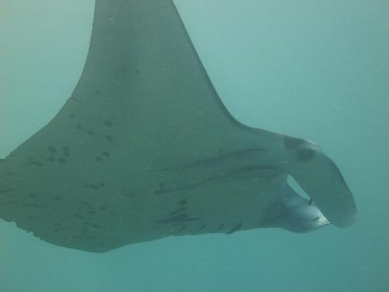 Nakia Resort & Dive: The Manta!