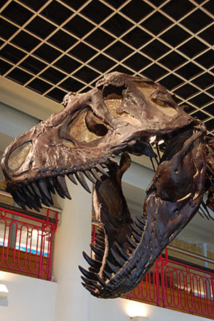 Academy of Natural Sciences of Drexel University: Dinosaur bones on exhibit