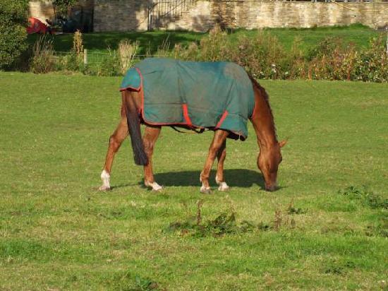 Eden Vale Farm: horse grazing
