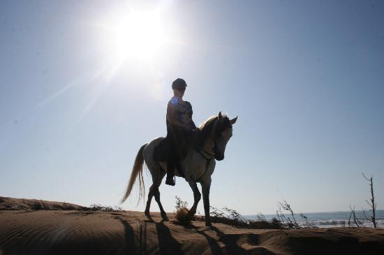 Equi Evasion: in the dunes