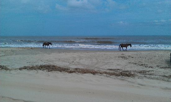 Wild Horse Adventure Tours: Wild Horses running down the shore line