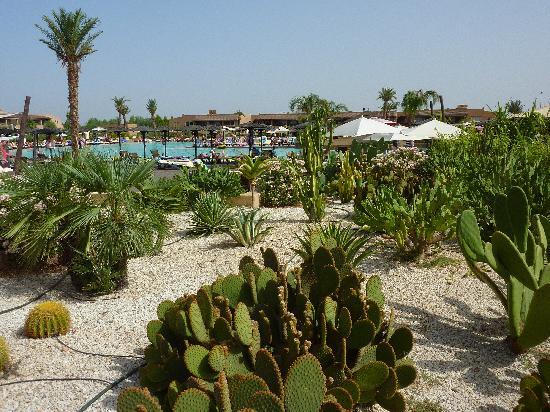 Hotel Riu Tikida Palmeraie: Jardim