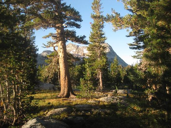 Lasting Adventures: Volgelsang Campground