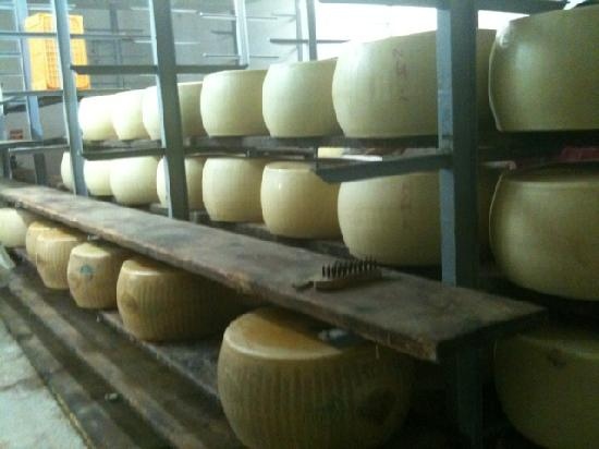 Emilian Land Tour: dairy cheese farm