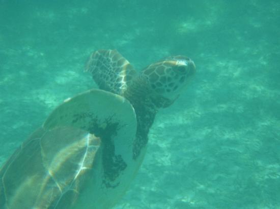 Akumal Beach: Saliendo a tomar aire