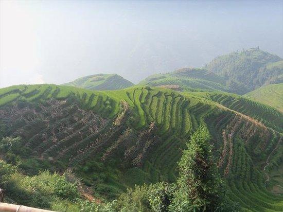 Dragon's Backbone Rice Terraces: Terrace fields