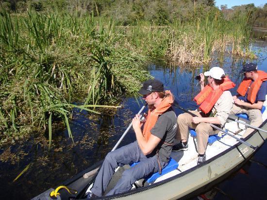 Everglades Adventure Tours: Canoe tour through the marsh