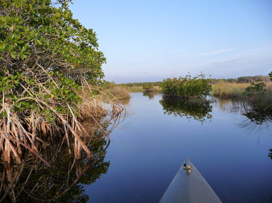 Everglades Adventure Tours: Traveling across the river of grass