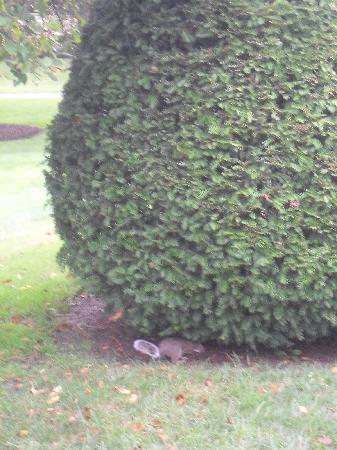Boston Common: Die Eichhörnchen waren zahlreich und nett zu beobachten beim vergraben der Wintervorräte.