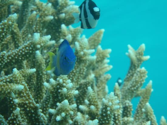 Ypao Beach Park: 色んな熱帯魚がいます