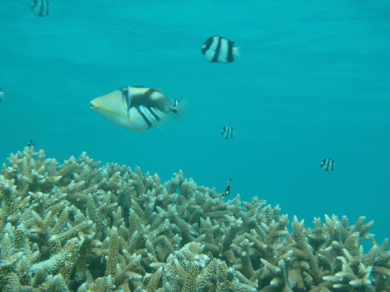 Ypao Beach Park: この魚に注意!