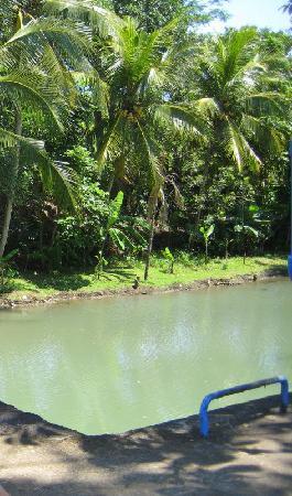 Banyan Tree Bike Tours: Take 5 here for cold drink and banana