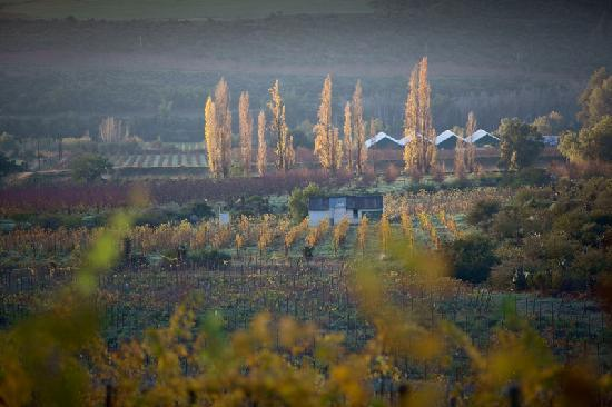 Karusa Vineyards: Nestled in the Cango Valley near Oudtshoorn