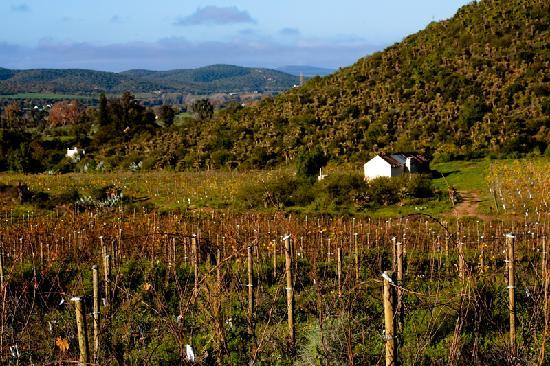 Karusa Vineyards: Beautiful Klein Karoo surroundings
