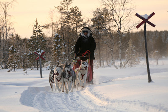 Mushing in the taiga in midwinter. Photo:Jokkmokkguiderna