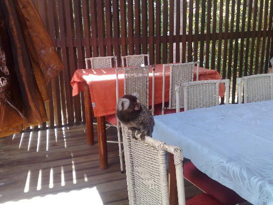 Hotel Primo: simpatici Micu in terrazza