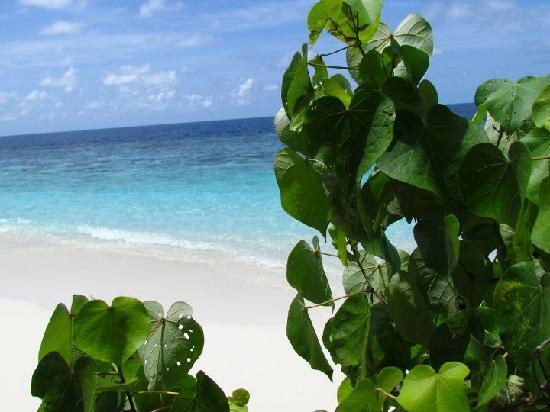 Bathala Island Resort: Spiaggia