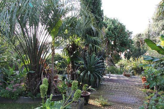 Cary Court Hotel: Gardens from pool area
