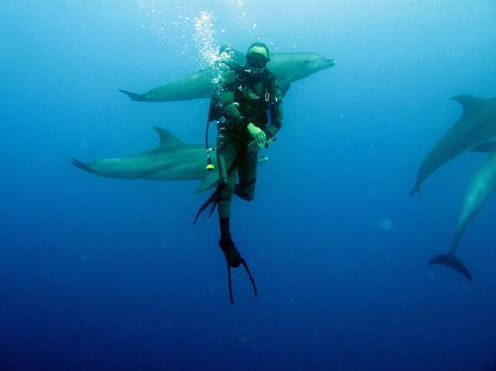 TGI Diving El Gouna: diving with dolphins