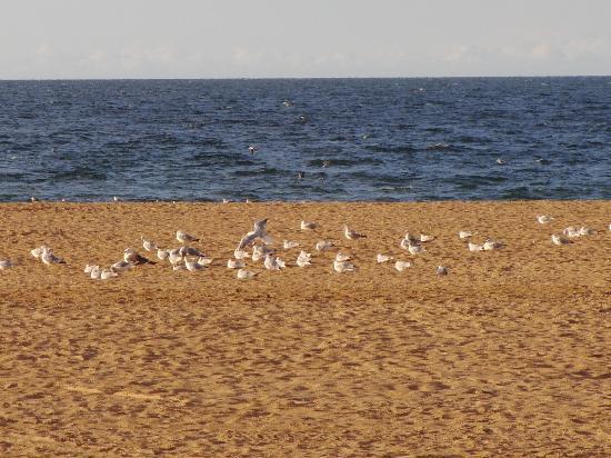 Hotel De La Plage: Gabbiani in spiaggia