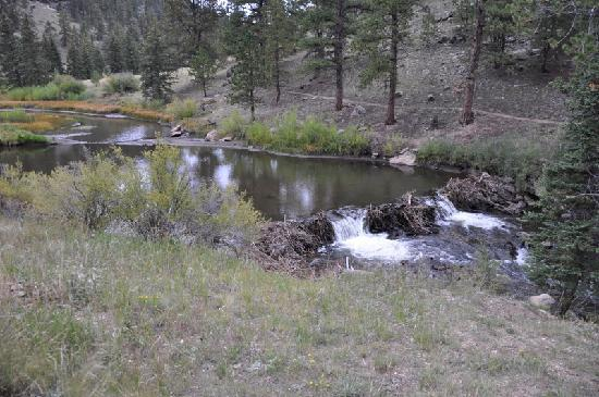 Ute Trail River Ranch: River, beaver dams and trout