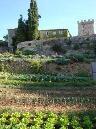 Tenuta di Spannocchia: View up from garden 1