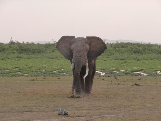 Natural World Kenya Safaris: Amboseli